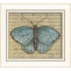 butterfly collection on pinterest butterflies butterfly