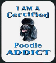 miniature poodle - Dog Breeds for Apartments Poodle Cuts, Tea Cup Poodle, Pink Poodle, Poodle Grooming, Pet Grooming, French Poodles, Dog Memes, Dog Friends, I Love Dogs