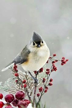 Winter.... tufted titmouse
