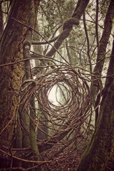 Land Art works by Simon Max Bannister, created during a week of art making in the Blyde River and Tzaneen areas of South Africa. Land Art, Art Et Nature, Forest Art, Wow Art, Parcs, Outdoor Art, Environmental Art, Tree Art, Installation Art