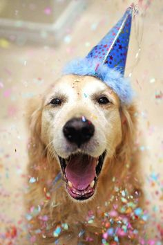 Dogs birthday. If we ever get a dog in totally taking a photo like this!