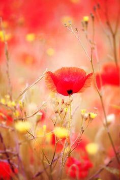 Secret Garden by Donna R