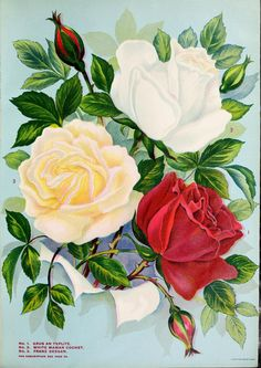 Young & Sons Co Spring catalogue 1914 Garden Catalogs, Seed Catalogs, Vintage Flower Prints, Vintage Flowers, Wall Painting Flowers, Beautiful Flower Quotes, Beautiful Flowers, Decoupage, Vintage Seed Packets