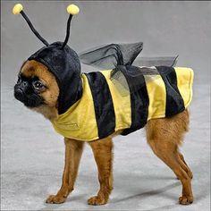 Voorjaarscollectie voor hondjes.