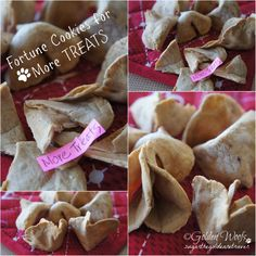 Fortune Cookies For Dogs: Sugar The Golden Retriever