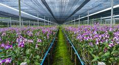 Orchideafarm Magyarországhoz közel In This Moment, Plants, Plant, Planets