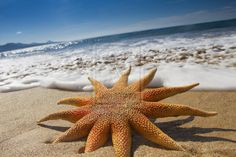 Beautful Beach Starfish by Spanishalex.deviantart.com
