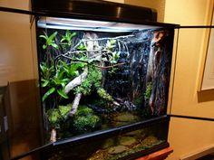 Frog vivarium