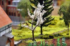 ciliegio-fiorito
