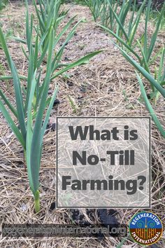 No-till farming is nothing new. It was used as far back as years ago. And how does it benefit us? Veg Garden, Edible Garden, Lawn And Garden, Garden Plants, Vegetable Gardening, Organic Farming, Organic Gardening, Gardening Tips, No Till Farming