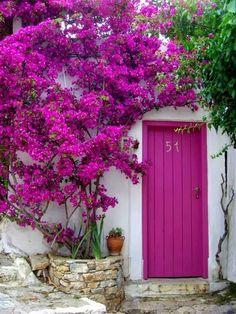 Magenta Door with bougainvillea