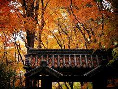 地蔵院:紅葉の山門