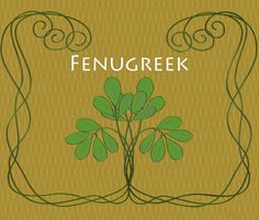 The Spice Series: Fenugreek: Medicinal benefits, Culinary Uses, and How to Grow information