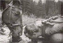 Igyál vizet abból a forrásból, ahol a ló iszik. Egy ló sosem fog rossz vizet inni. Muffin, Muffins, Cupcakes
