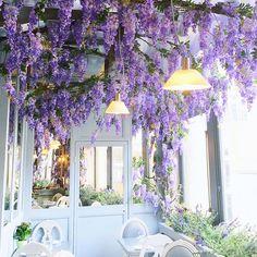Grape Expectations  #wisteriahisteria