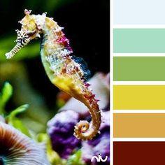 Sea horse (fauna)