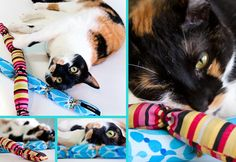 Don't forget kitty! Add catnip to a simple tube and tie into segments for kicking, licking fun.