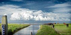 Creek/salt marshes, Zwarte Haan, Wadden Sea, Friesland (NL) Salt Marsh, The Province, Trail, Stage, Coast, Country Roads, River, Temples, Rivers