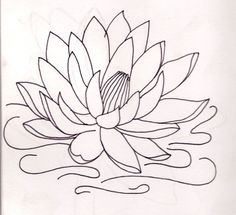 22 Best Water Lily Tattoo Design Drawing Images Lily Tattoo Design
