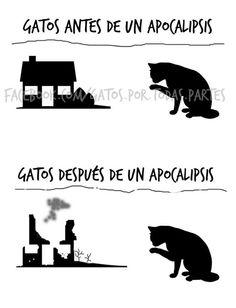 Gatos antes del apocalipsis