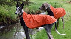 UK stockist of Chilly Dogs Coats. Incredible quality, fleece lined, waterproof and windproof. Find a warm dog coat, dog jacket or sweater for your dog. H&m Raincoat, Yellow Raincoat, Outdoor Coats, Outdoor Dog, Outdoor Gear, Nylons, Waterproof Dog Coats, Chilly Dogs, Patrones
