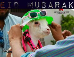 Cute Animal on Eid ul Adha