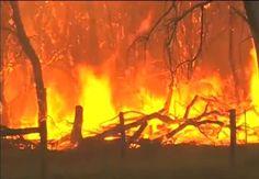 Un incendio es, tal vez, lo peor que le puede pasar a un bosque. Se trata de un episodio tremendamente destructivo. Y peligroso, ya que tanto el propio fuego como el humo que produce puede da?ar a los seres vivos – y a los seres humanos – y las consecuencias posteriores tampoco son buenas. Pero, ?y si