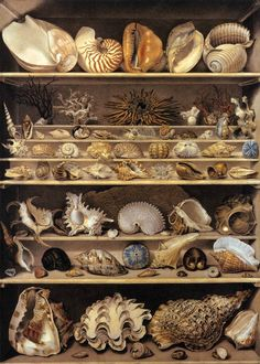 Centuries Past LEROY DE BARDE, Alexandre-Isidore Selection of Shells Arranged on Shelves Watercolour and gouache on heavy paper, 125 x 90 cm Musée du Louvre, Paris Louvre Museum, Shell Collection, Cabinet Of Curiosities, Seashell Art, Starfish, Seashell Display, Shell Crafts, Art Graphique, Displaying Collections