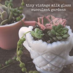 tiny succulent gardens in vintage milk glass at {Jules} bits of whimsy blog  ~  These would make great Christmas gifts or anytime gifts, really! ♥