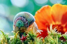 Snail!!  It looks much better in someone else's garden.