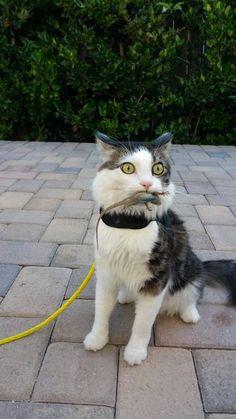26 Imágenes que sólo entenderán los amantes de los gatos