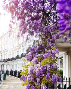 #TGIF | The #wisteria season has sent Instagram purple!  @a_ontheroad captures a wonderful slice of #NottingHill to wish you Happy Friday! // #thisislondon by london