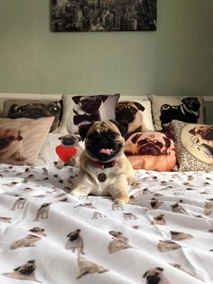 For the love of pugs!