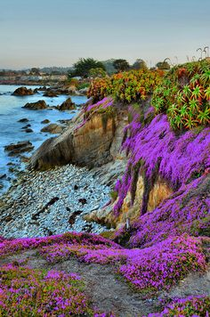 The stark beauty of the vivid purples, hues that vary from pink to fushia, bright blue's, from aqua to teal..lush greens. take a moment to appreciate what an amazing thing life truly is..