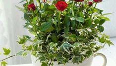 Καλό & χαρούμενο Σαβ/κο με όμορφες eikones.top - eikones top Herbs, Plants, Red Roses, Garden Plants, Projects, Herb, Plant, Planets, Medicinal Plants