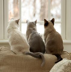 absolutely, perfectly beautiful these kitties are my dream