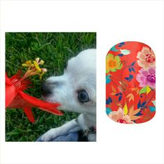 My #chihuahua Louie paired with a matching #jamberry #nail #wrap #design! www.jaszumie.jamberrynails.net