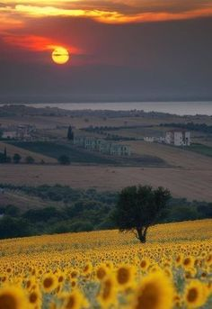 Tuscany, Italy. Yet another place I would love to go.  Maybe we need to get stationed in Europe next then just travel as much as possible...