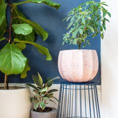 Plant stand hack