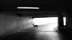 Deer by Samuel Hicks from the UK won the Professional Advertising category in the 2015 B&W Spider Awards. More winning images from finalists are fe...