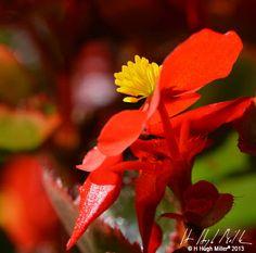#floral #photography #flower #hhughmiller