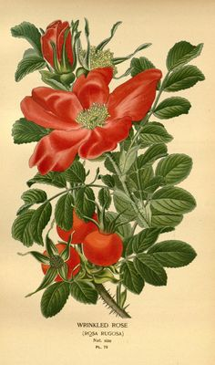 v. 1 - Favourite flowers of garden and greenhouse / - Biodiversity Heritage Library - many more