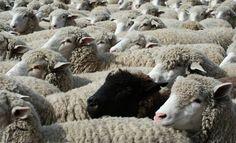 Essere le pecore nere vuol dire solo pensare e agire in modo non convenzionale