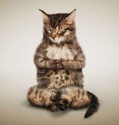 des Chats qui font du Yoga