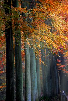 ♂ Amazing nature colorful autumn trees A Spot of Sun on a Forest Walk