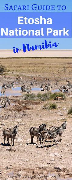 Safari guide to Etosha National Park in Namibia Waterhole safari in Etosha National Park Namibia *********************************** Travel Couple, Family Travel, Chobe National Park, Africa Destinations, Travel Destinations, Namibia, African Safari, Future Travel, Africa Travel