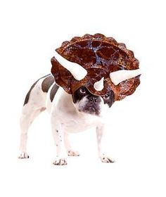 Halloween Costumes for Pets:  Triceratops Dog Costume