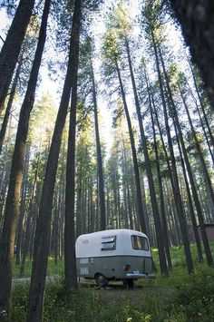Boler looking up at the trees