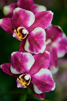 Orchids, orchids, orchids...#orchidshow #nybotanicalgarden