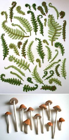 fern and mushroom cake toppers